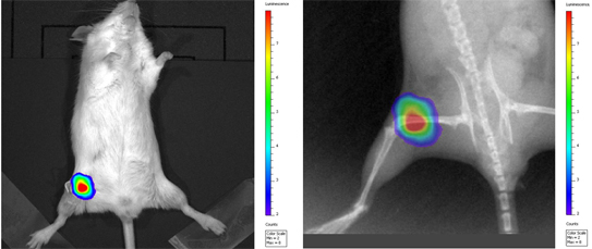 comparison luminescence and X-ray